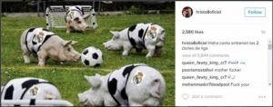 """صورة.. نجم شهير يتهكم على لاعبي ريال مدريد ويصفهم بـ""""الخنازير""""!"""